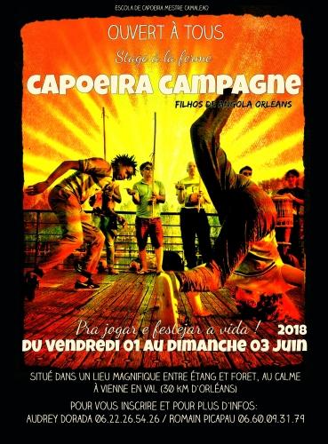 capoeira,stage capoeira,orléans,filhos de angola,picapau,capoeira angola